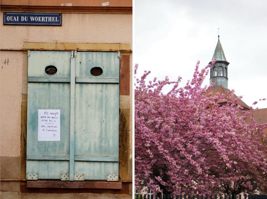 strasbourg, strasbourg printemps, arbre en fleurs, arbre rose, clocher