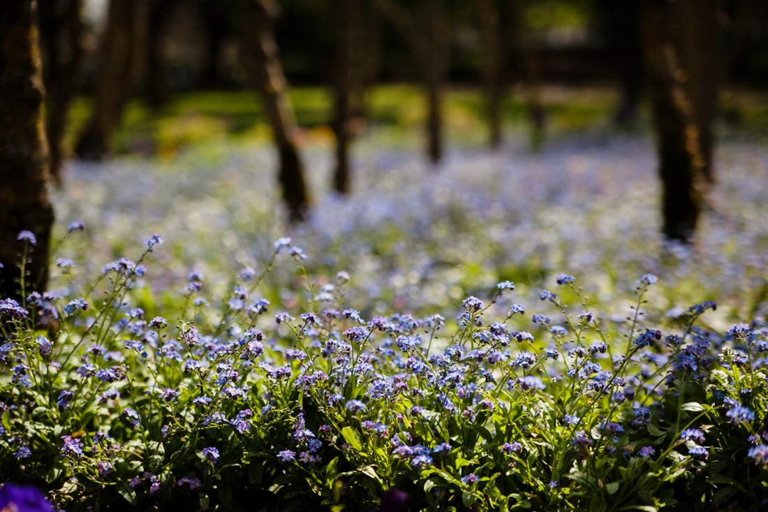 toulouse, jardin des plantes