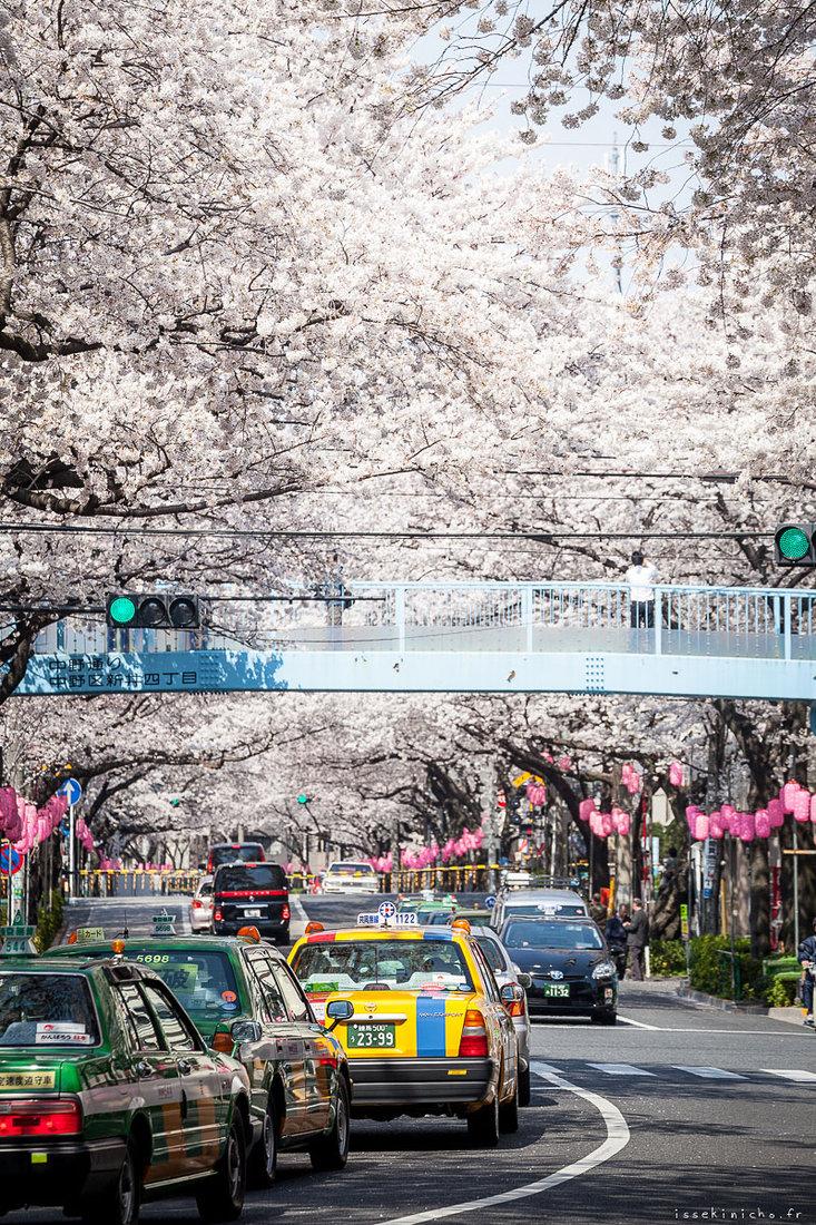 Tokyo Ohanami, Alexandre Bonnefoy