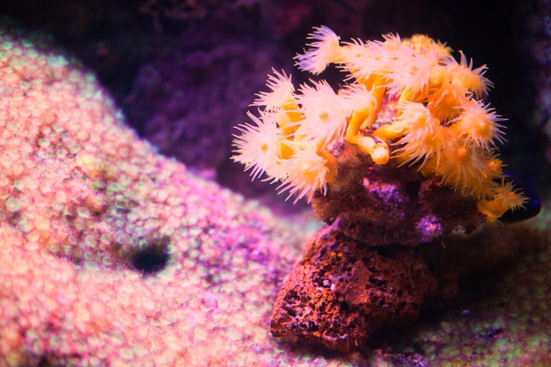 aquarium la rochelle,
