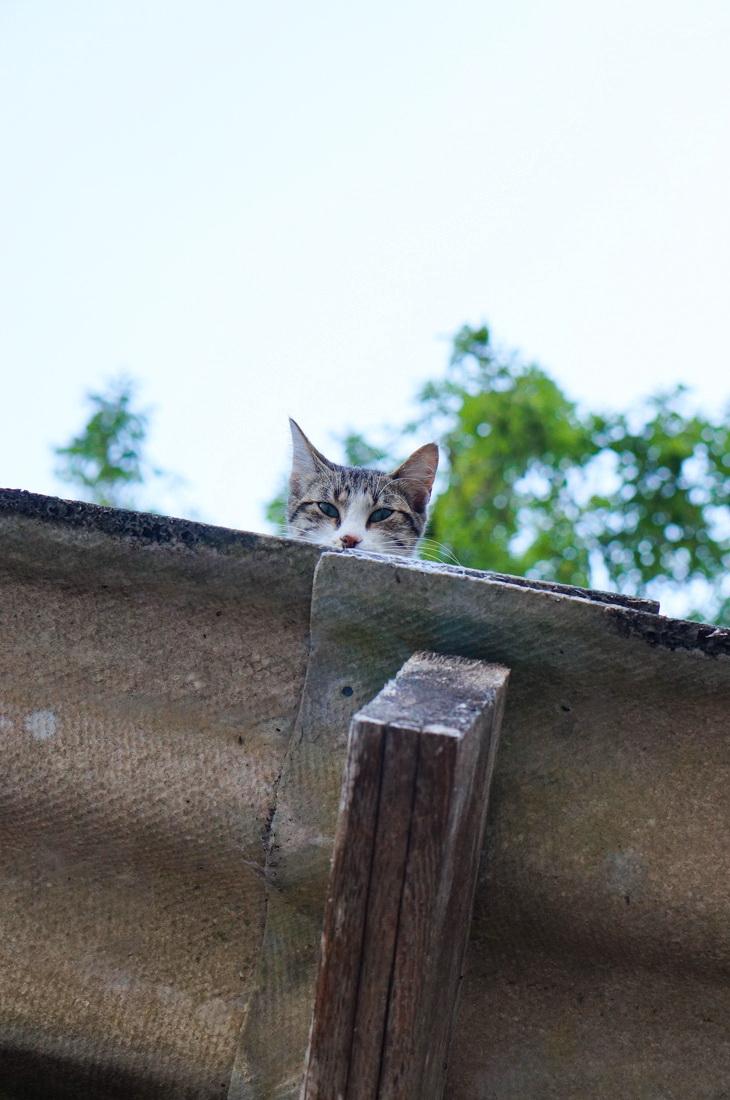 chat, la garette, niort, marais, tourisme, venise verte, marais poitevin, village pittoresque, village français, village france