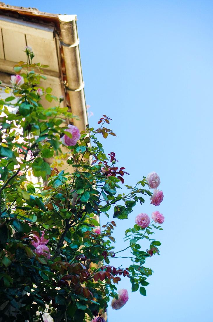 la garette, niort, marais, tourisme, venise verte, marais poitevin, village pittoresque, village français, village france, roses, rosier