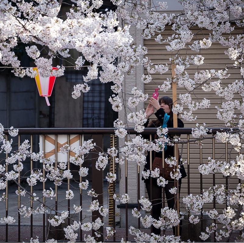 Tokyo-Ohanami-CARRE