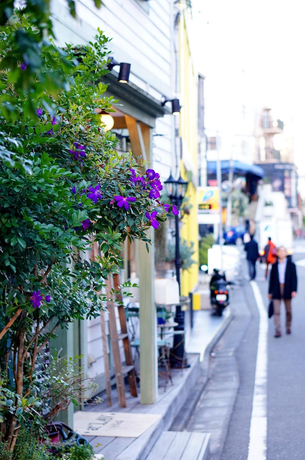 harajuku street, street life tokyo, city life tokyo