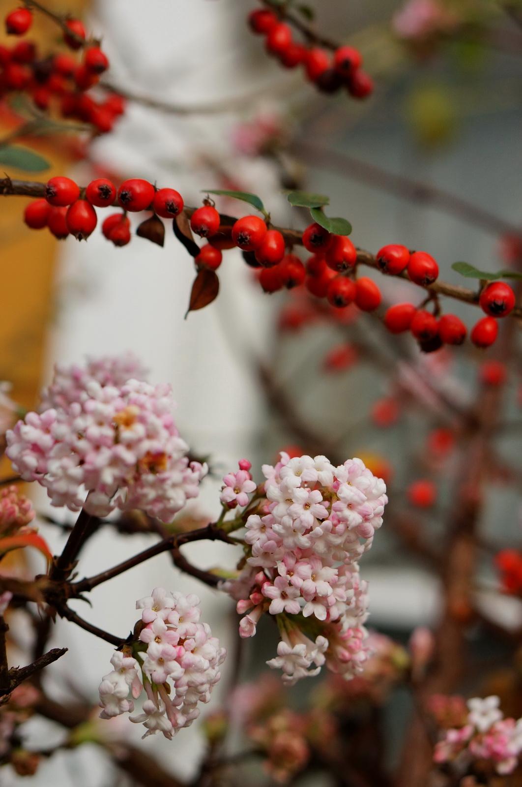 Mi-hiver, mi-printemps !