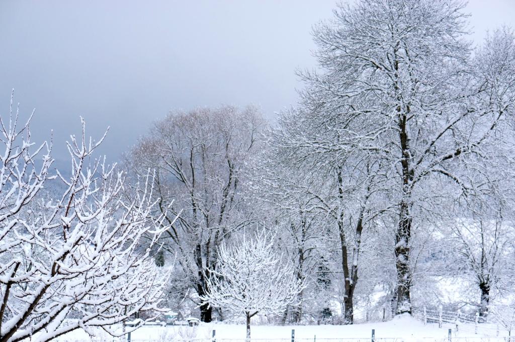neige, hiver en auvergne, auvergne, allier