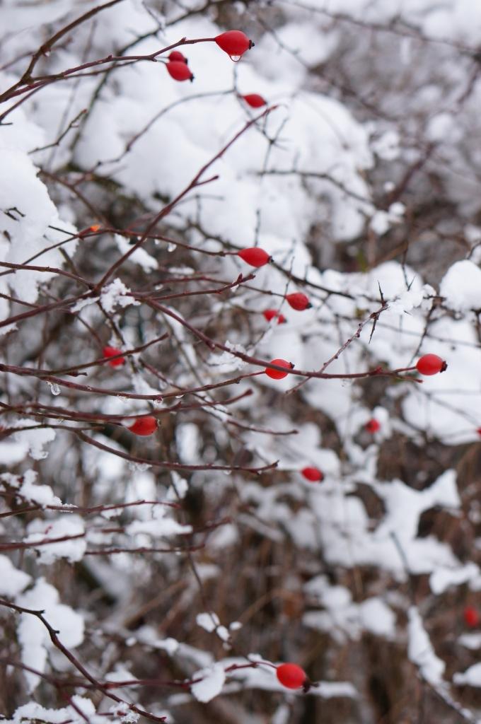 neige, hiver en auvergne, auvergne, allier, gratte-cul