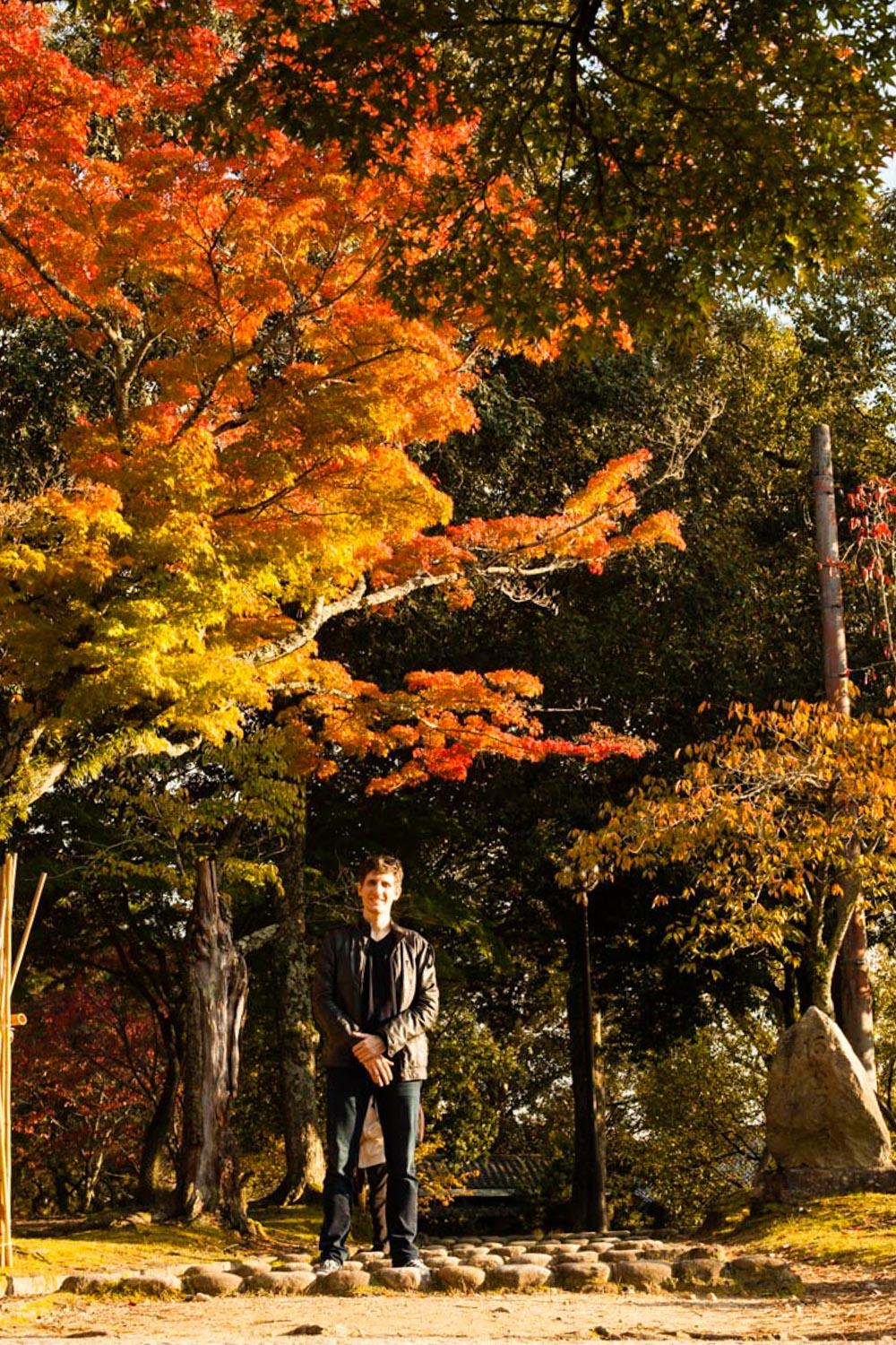 momiji, momiji nara, momiji japon, automne japon, érables japon, érables momiji