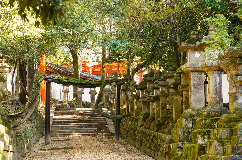 nara, nara japon, tourisme nara