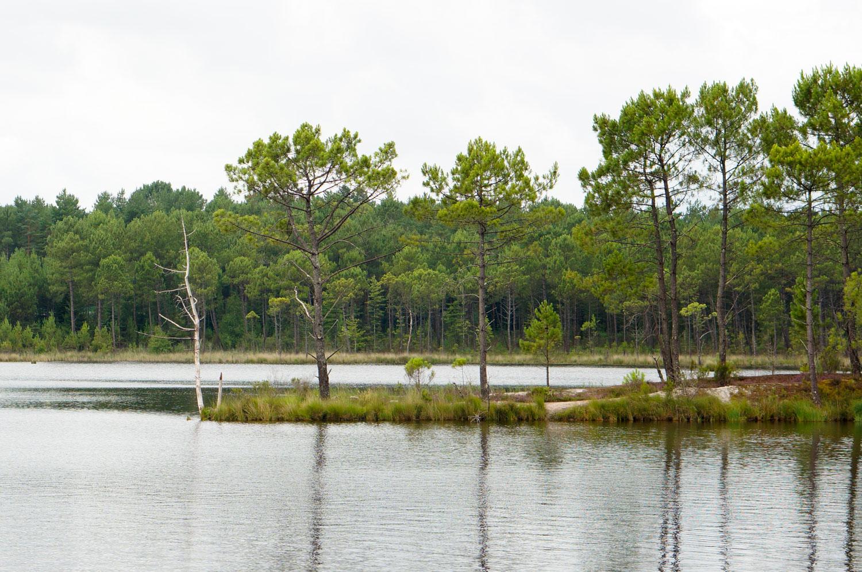 forêt des landes de gascogne, domaine des lacs d'hostens, tourisme gironde, week-end gironde, week-end au vert, balade vtt, vtt forêt gironde, vtt aquitaine, balade forêt, pins