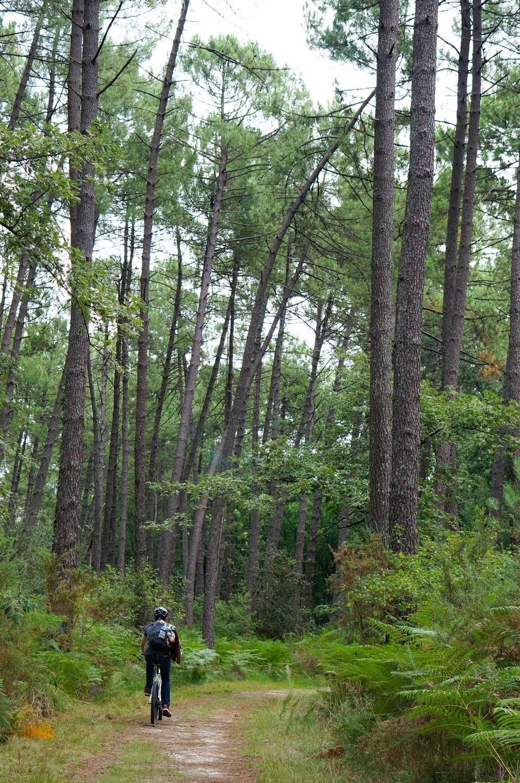 forêt des landes de gascogne, domaine des lacs d'hostens, tourisme gironde, week-end gironde, week-end au vert, balade vtt, vtt forêt gironde, vtt aquitaine, balade forêt, fougères