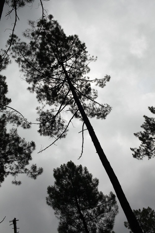 Forêt landes Gascogne + St-Macaire_5094