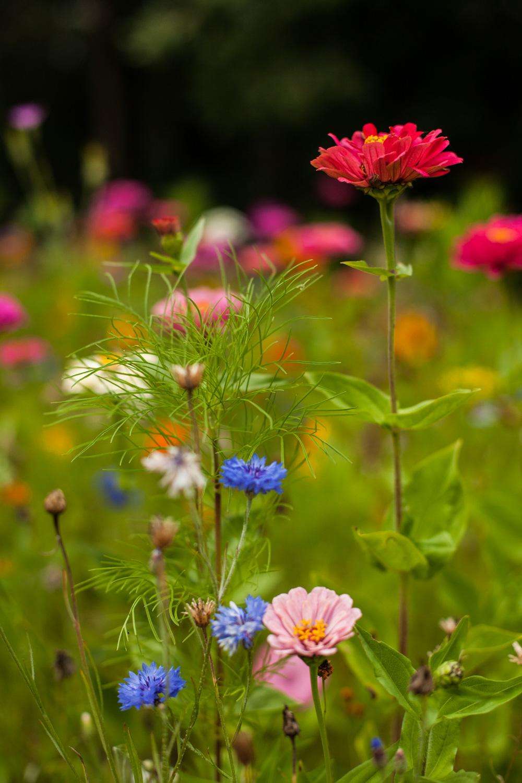 parc floral, parc floral de la court d'aron, parc floral vendée, idée balade vendée, jardin vendée, beau jardin vendée, tourisme vendée, séjour vendée