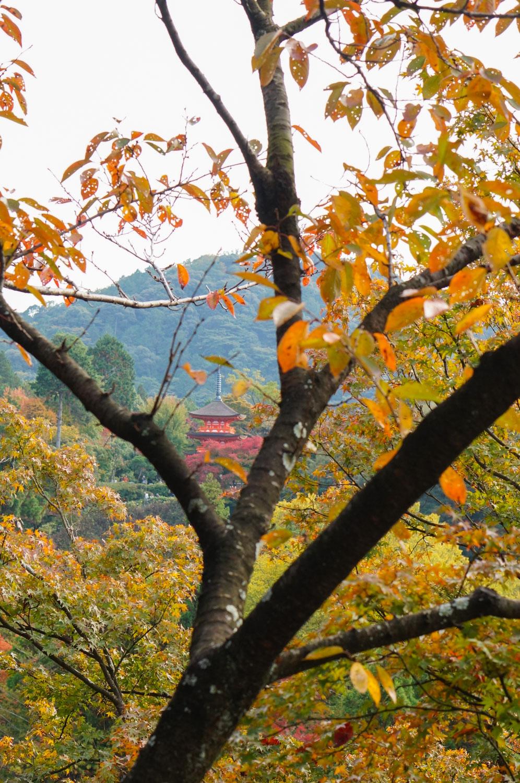 momiji, momiji kyoto, voyage kyoto, gion kyoto, gion, automne kyoto, kiyomizu-temple, temple kiyomizu