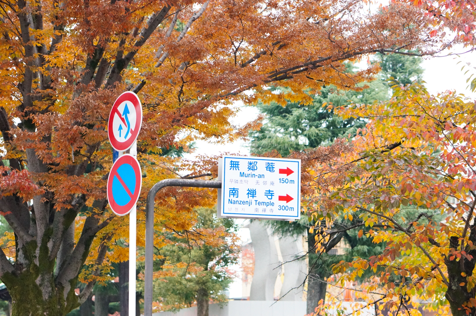 kyoto, kyoto automne, fall kyoto, momiji kyoto, tourisme kyoto, que faire à kyoto, voyage kyoto