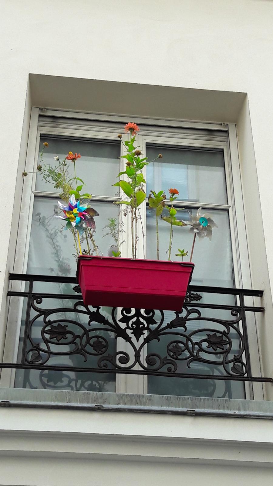 Le charme des jardinières pleines de poésie...