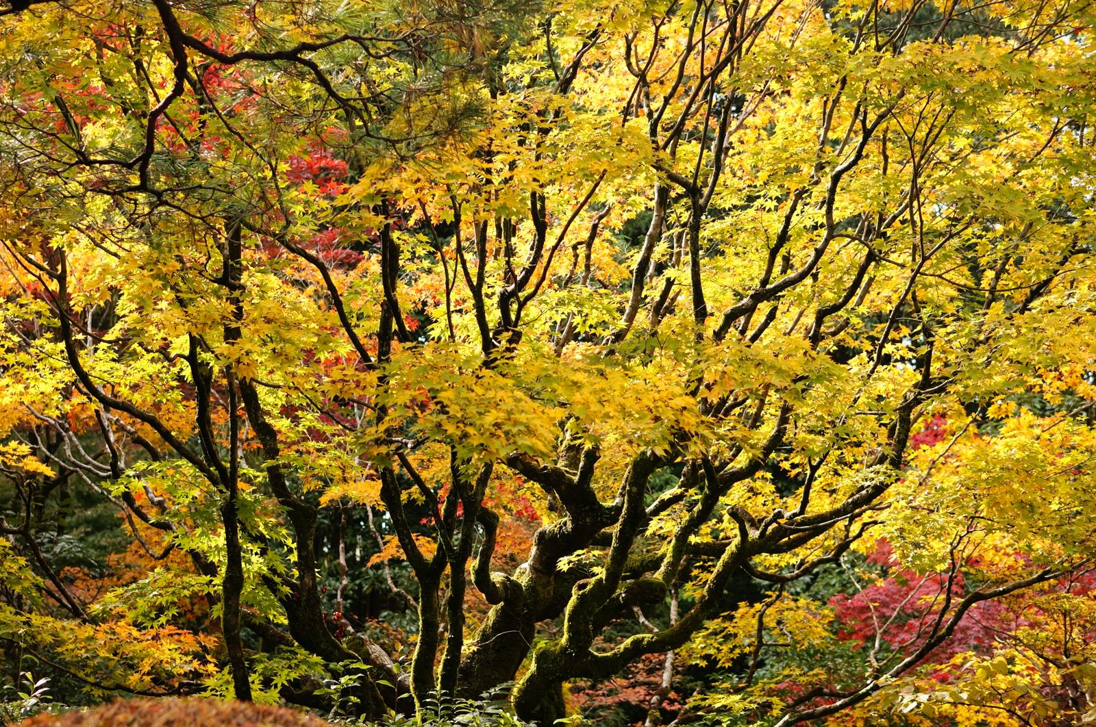 1411 Kyoto jour 3 temples_06159