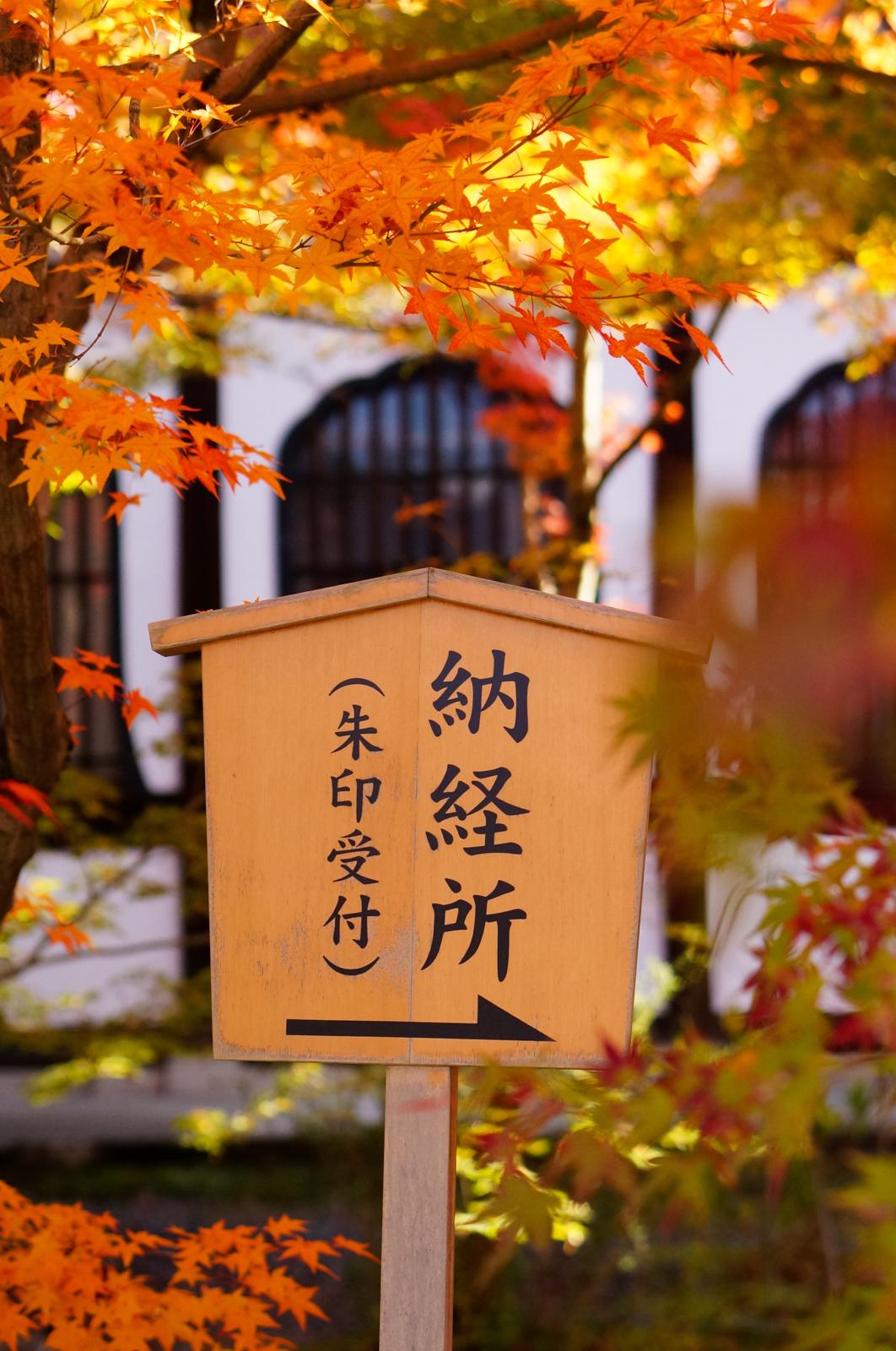 Eikan-do Zenrin-ji, eikando zenrinji, eikando temple, kyoto, kyoto chemin de la philosophie, kyoto momiji, automne kyoto, balade kyoto, séjour kyoto, voyage kyoto, érables kyoto, jardins kyoto