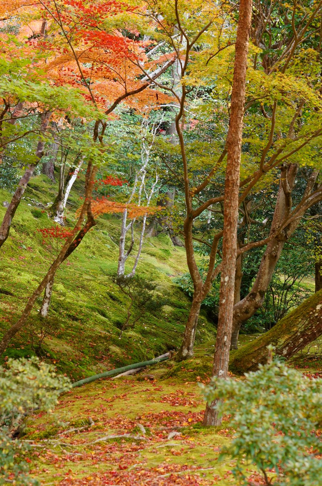 kyoto, kyoto chemin de la philosophie, kyoto momiji, automne kyoto, balade kyoto, séjour kyoto, voyage kyoto, érables kyoto,ginkaku-ji, ginkakuji temple, temple d'argent, temple d'argent kyoto,