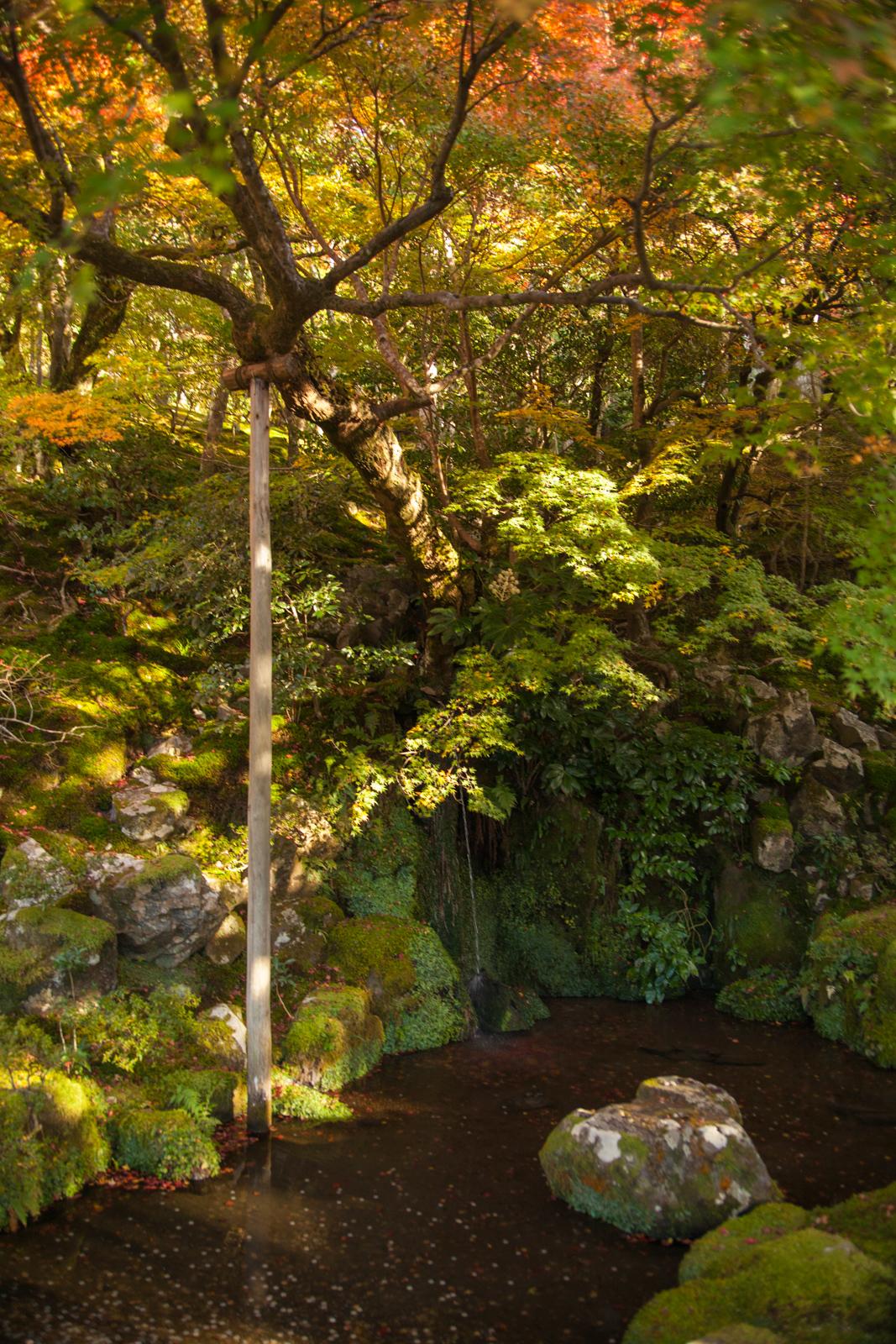 kyoto, kyoto chemin de la philosophie, kyoto momiji, automne kyoto, balade kyoto, séjour kyoto, voyage kyoto, érables kyoto,ginkaku-ji, ginkakuji temple, temple d'argent, temple d'argent kyoto
