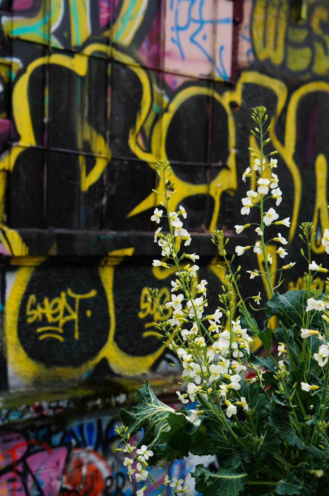 paris 20, balade paris 20, paris underground, paris alternatif, paris insolite, découvrir paris 20, que faire paris 20, balade originale paris 20, paris street art, street art paris 20