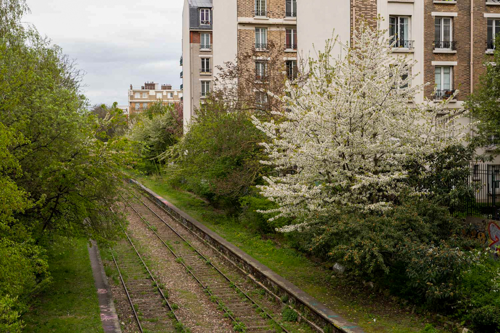 paris 20, balade paris 20, paris underground, paris alternatif, paris insolite, découvrir paris 20, que faire paris 20, balade originale paris 20, petite ceinture, petite ceinture paris