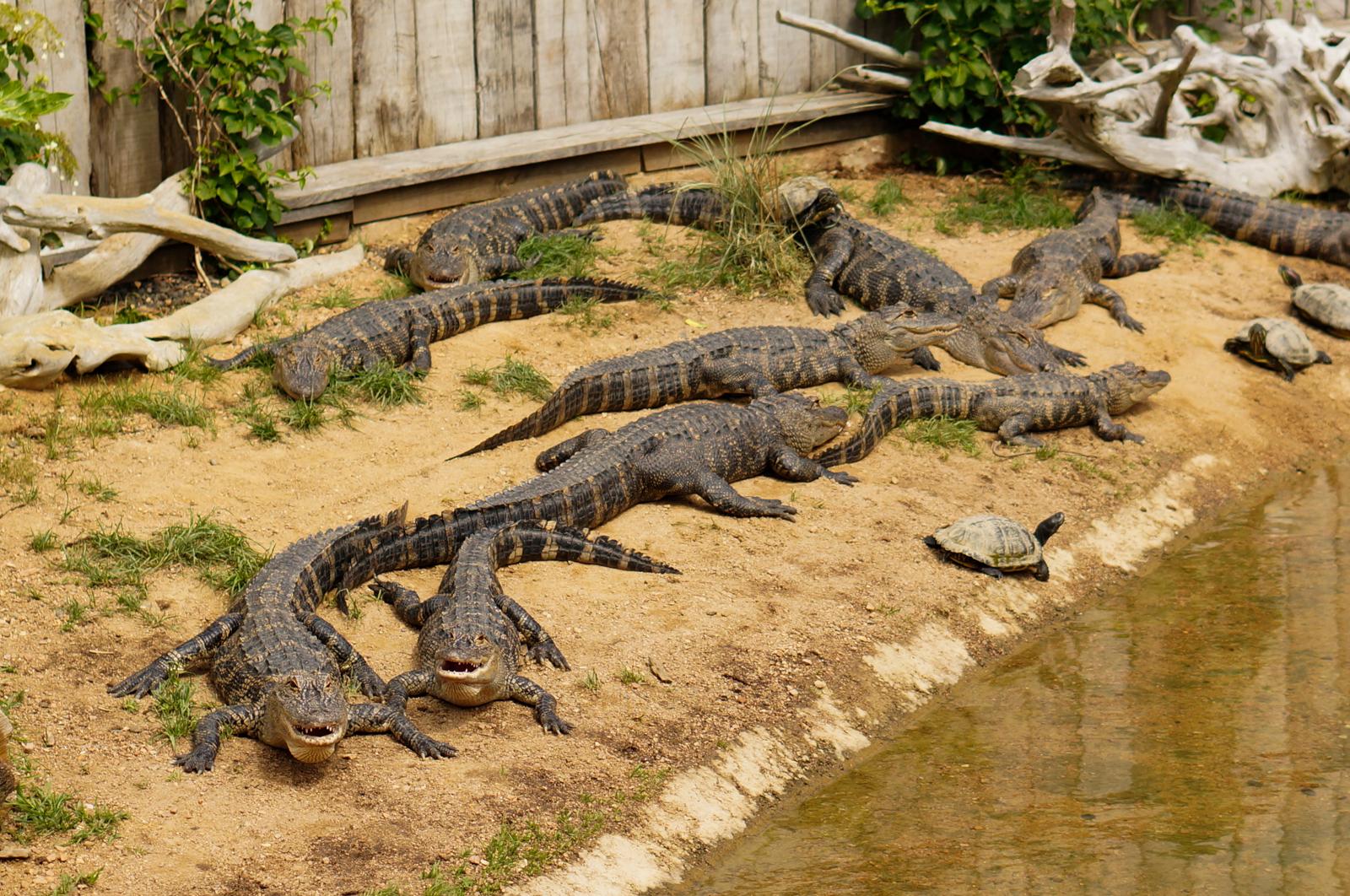 pal, parc d'attractions pal, parc animalier pal, zoo pal, tourisme auvergne, tourisme allier, crocodiles