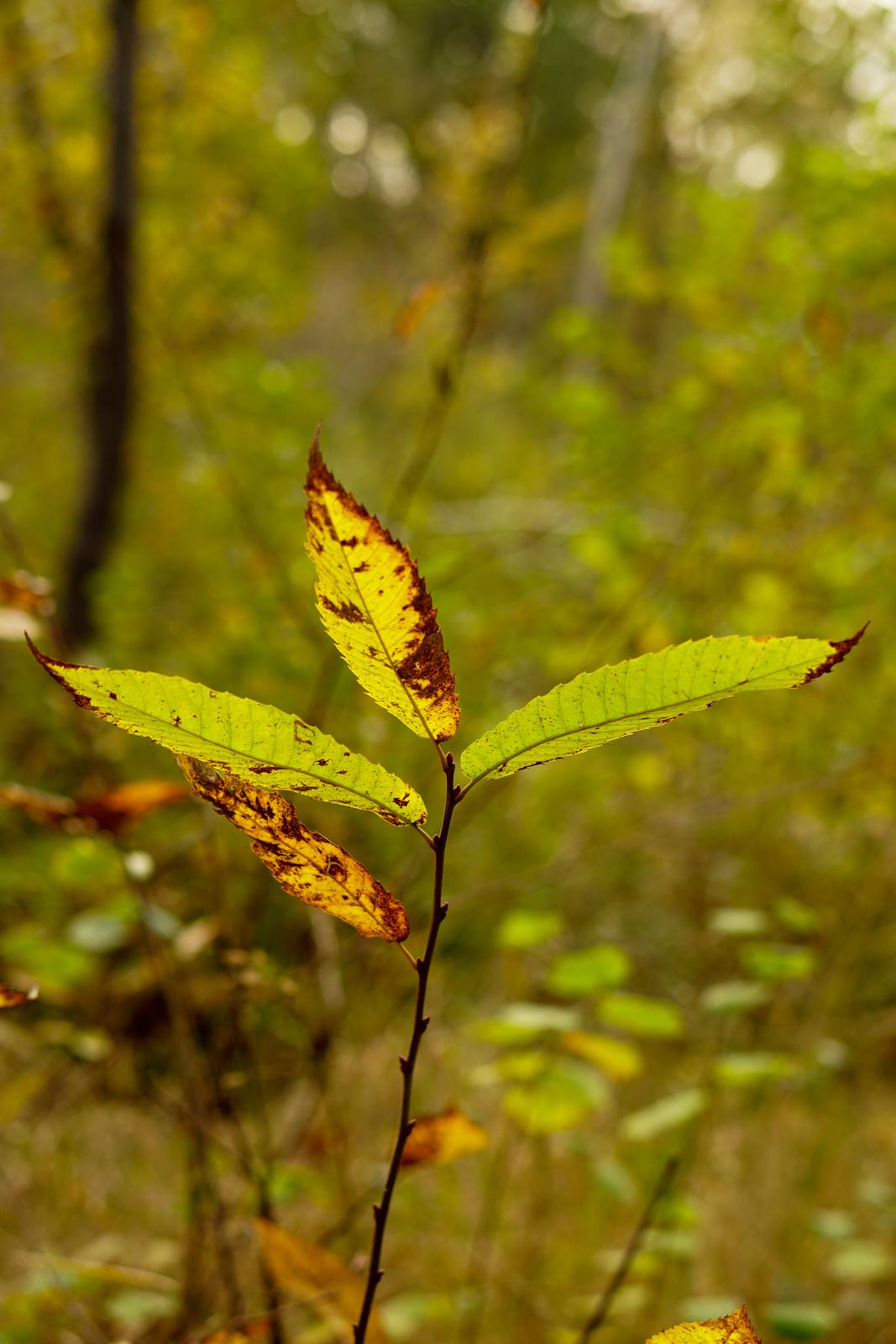 forêt notre-dame, forêt santeny, forêt val-de-marne, forêt val de marne, forêt région parisienne, forêt automne paris