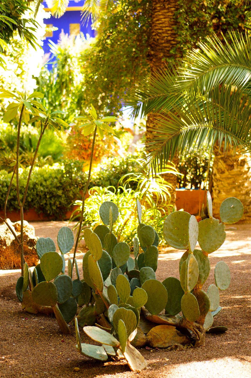 jardin majorelle, jaridn marrakech, idée balade marrakech, tourisme marrakech, visiter marrakech, incontournable marrakech