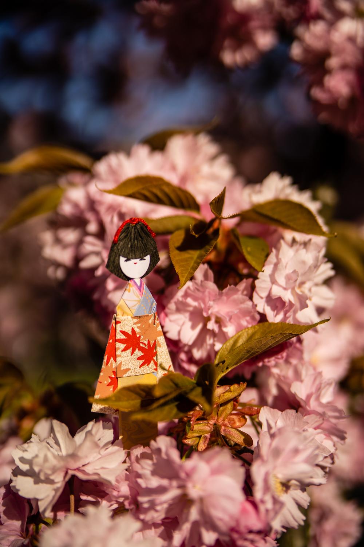 cerisiers japon france, hanami france, sakura france, floraison cerisiers japon, parc de sceaux cerisiers, printemps parc de sceaux, hanami parc de sceaux, sakura parc de sceaux